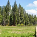 North Grove Campground surrounds a lower montane meadow.- North Grove Campground