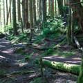 Nature trail at Tinkham Campground.- Tinkham Campground