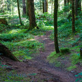 The trail to the river.- Tinkham Campground