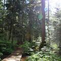 Sunlight streams through the forest on the Denny Creek Trail.- Melakwa Lake via Denny Creek Trail