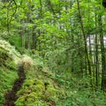 The trail to Munra Point leads through dense Pacific Northwest forest.- Munra Point Hike