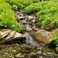 Gentle streams cross Anderson-Watson Lakes Trail.- Anderson + Watson Lakes