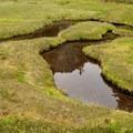 Water winds through meadows at Watson Lakes. - Anderson + Watson Lakes