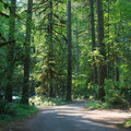 The Trout Creek Campground is situated in a lush forest that keeps the area cool in summer.- Trout Creek Campground