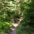 The Upper Salmon River Trail.- Upper Salmon River Trail