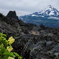 A lone flower in the sea of black lava. North Sister (10,085') and Middle Sister (10,047') in the background- Little Belknap Crater