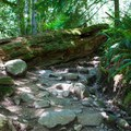 The trail to Mount Si has some steep and rocky sections.- Mount Si Hike