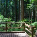 A wayside on the trail to Mount Si.- Mount Si Hike
