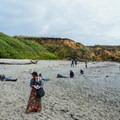 Beachcombers frequent the shoreline.- Glass Beach