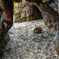Sea caves at the edge of Glass Beach.- Glass Beach