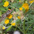 Unidentified species (help us identify it by providing feedback).- Muddy Fork