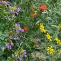 Abundant wildflowers on the Muddy Fork hike.- Muddy Fork