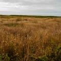 The path takes you through a grassy meadow.- Glass Beach
