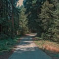 Road through the campground.- Tan Oak Campground