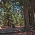 Camping in a Redwood Forest.- Tan Oak Campground