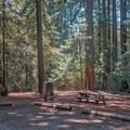 Roomy campsites.- Tan Oak Campground