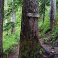 Trail junction for Melakwa Lake and Denny Creek.- Melakwa Lake via Denny Creek Trail