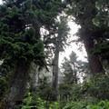 Old-growth forest surrounds Melakwa Lake.- Melakwa Lake via Denny Creek Trail