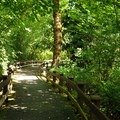 Barrier-free path to the Skagit River.- Rasar State Park