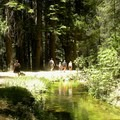 The hike to University Falls.- University Falls Trail