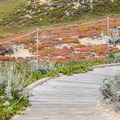 Path leading to the beach.- Fort Ord Dunes State Park