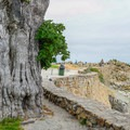 An incredible old tree at Lovers Point Park.- Lovers Point Park