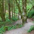 Wide, easy trail to start.- Bridal Veil Falls, Washington