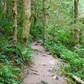 Walk through moss-covered alders, maples and firs.- Bridal Veil Falls, Washington