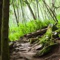Ferns and alders.- Bridal Veil Falls, Washington