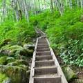 Flights of stairs up to the Bridal Veil Falls.- Bridal Veil Falls, Washington