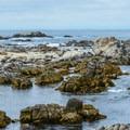 The rocky shoreline creates an abundance of tidepools at Asilomar State Marine Reserve.- Asilomar State Marine Reserve