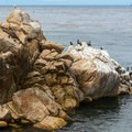 A protected bird sancturary at Asilomar State Marine Reserve.- Asilomar State Marine Reserve