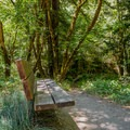 A bench along the Aptos Fire Road.- Historic Loop Trail