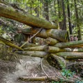 The forest reclaims a man-made structure.- Historic Loop Trail