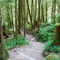 Smooth trail through alder, fir and maple groves.- Lake Serene