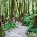Smooth trail through alder, fir and maple groves.- Lake Serene