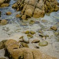 Tide pools.- Point Pinos Lighthouse Reservation