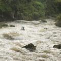 Junkyard on the Nantahala River.- Nantahala River
