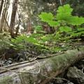 - Hoh to Sol Duc via High Divide Trail
