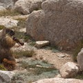Bear-proof cannisters are essential to keep marmots from stealing food and destroying campsites.- Mount Whitney Hike via Whitney Portal