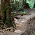 The Barclay Lake Trail has an easy, rolling grade.- Barclay Lake