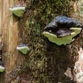 Large d fungi.- Barclay Lake