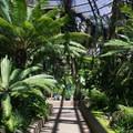 Inside the Botanical Building.- El Prado