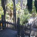 Stairs down to Palm Canyon.- El Prado