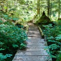 Well-travelled wooden planks across a marshy area.- Eagle Lake
