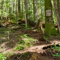 The trail to Eagle Lake is very steep, with much hand-over-hand root scrambling.- Eagle Lake