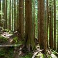 The trail to Eagle Lake meanders across the ridge.- Eagle Lake