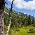 Paradise Meadow.- Eagle Lake
