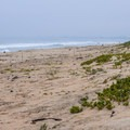 Sandy dunes at Salinas River State Beach.- Salinas River State Beach