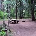 Spacious campsites in Sacandaga Campground.- Sacandaga Campground